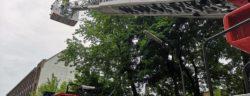 Die Küken wurden mit der Drehleiter wieder in ihr Nest gesetzt. Foto: Feuerwehr Velbert