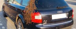 Bienenschwarm auf dem Audi