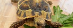 Ungewöhnlicher Fund bei den Grenzkontrollen der Rosenheimer Bundespolizei auf der A93: Eine Schildkröte lag im Handschuhfach eines Transporters. (Foto: Bundespolizei)
