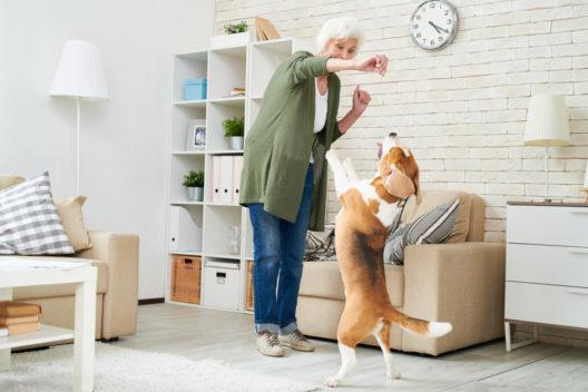 feature post image for Was ist Dogdancing und kann es mein Hund auch?