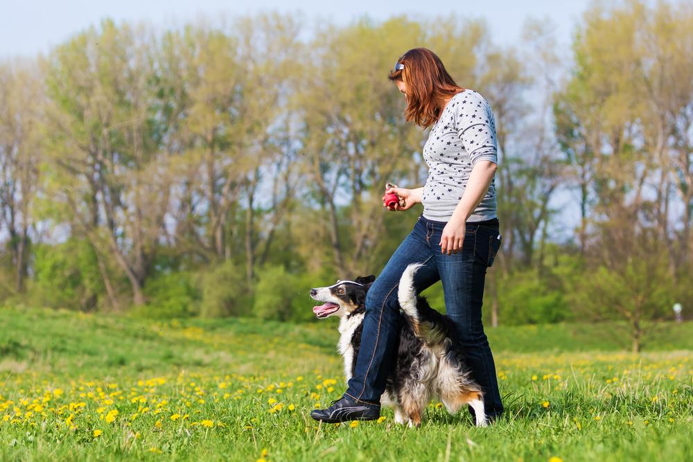 Hund umkreist das Bein einer Frau.