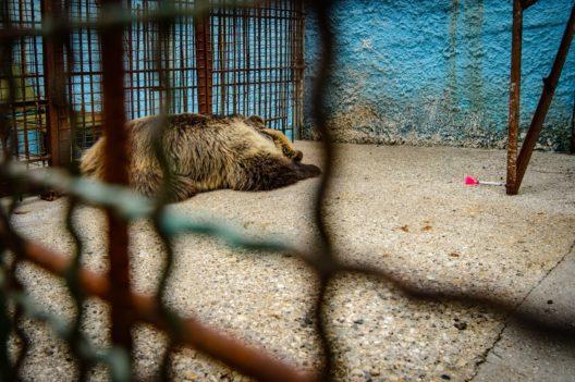 Rückblick: Dushi in ihrem kleinen Käfig im Safari Park Zoo Fier (Bild: © Helmut Wachter | VIER PFOTEN)
