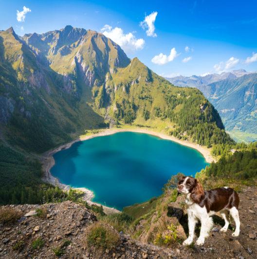 Hund am Lago Tremorgio im Tessin (Bild: Ksenia Molina - shutterstock.com)