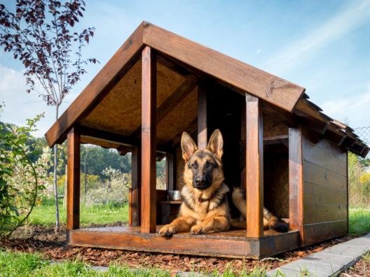 feature post image for Hundehütte bauen - so einfach geht's