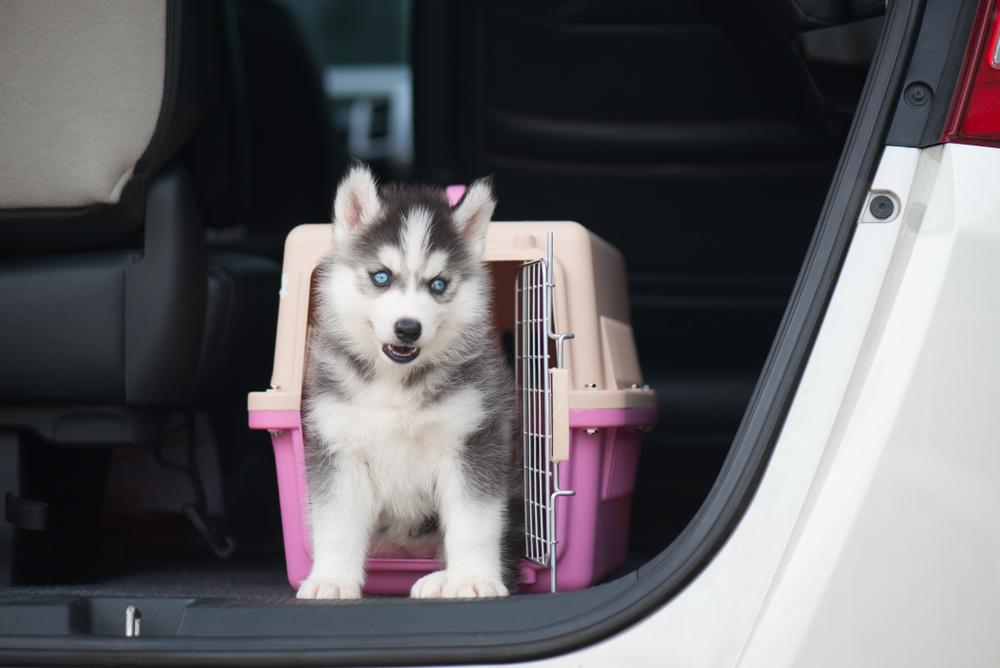 Hund sitzt in einer Autobox im Kofferraum eines Autos
