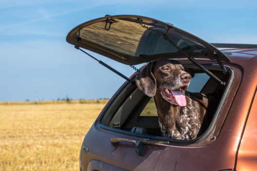 feature post image for So transportieren Sie Ihren Hund sicher im Auto