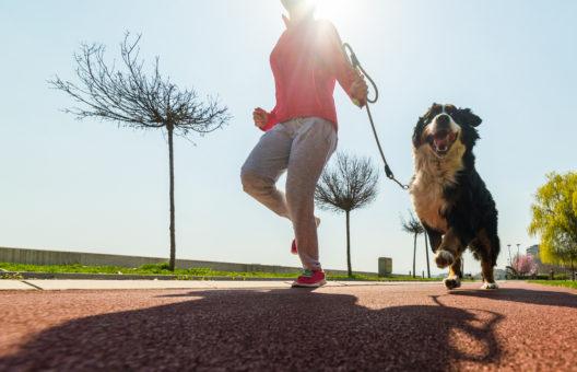 feature post image for Hundesport: Den Hund artgerecht fordern und fördern