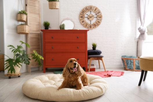 feature post image for Mit wenig Aufwand zu einem attraktiven Hundezimmer