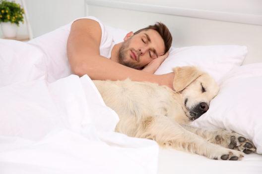 feature post image for Hund im Bett - Argumente pro und contra