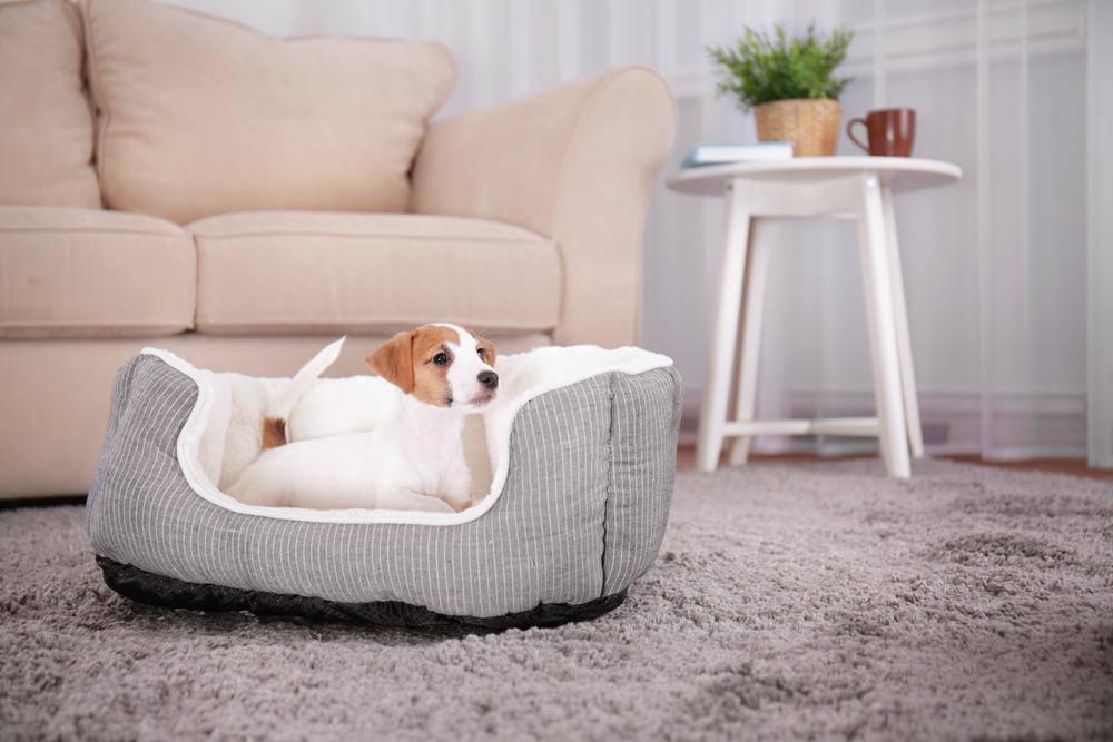 Hund liegt in einem Hundebett