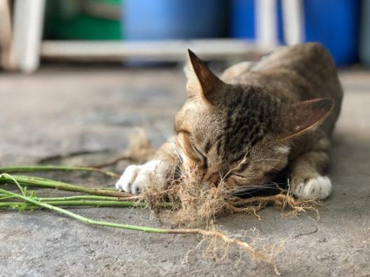 feature post image for Pflanzenkraft als Alternative für Tiere