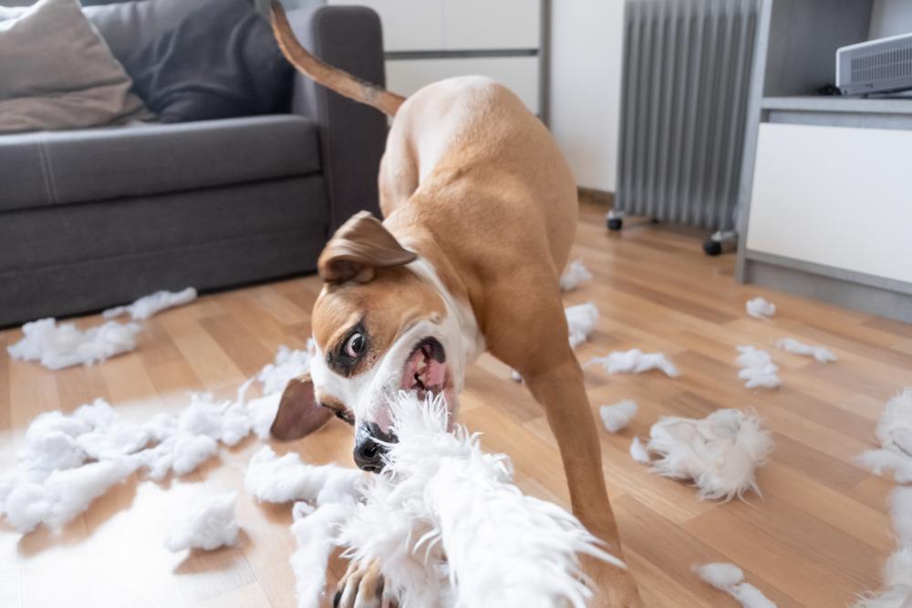 Hund beisst Kissen in Stücke
