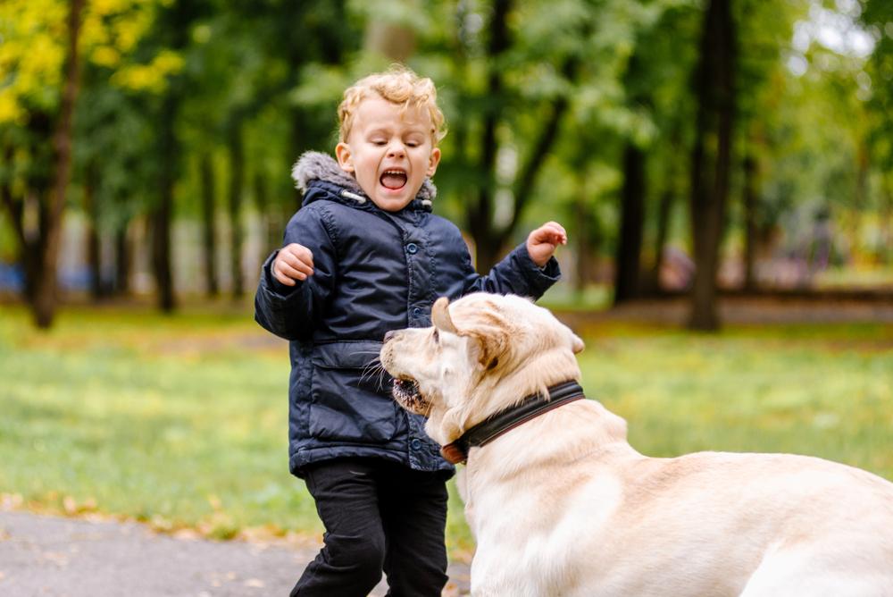 Ein großer Hund erschreckt ein Kind im Park
