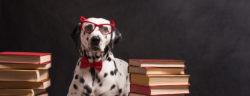 Dalmatischer Hund mit Lesebrille und roter Schleife, sitzend zwischen Haufen von Büchern, auf schwarzem Hintergrund