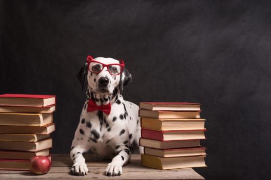 feature post image for Tierische Intelligenz - So clever nutzen Tiere Werkzeuge