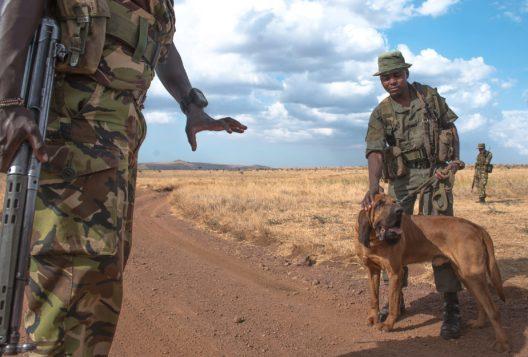 Zur Anti-Wilderei-Einheit des Lewa Wildlife Conservancy gehören auch Spürhunde. (Bild: Zoo Zürich, Martin Bauert)