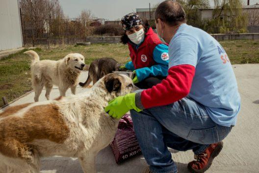 © Bogdan Dinca   Animal Society   VIER PFOTEN