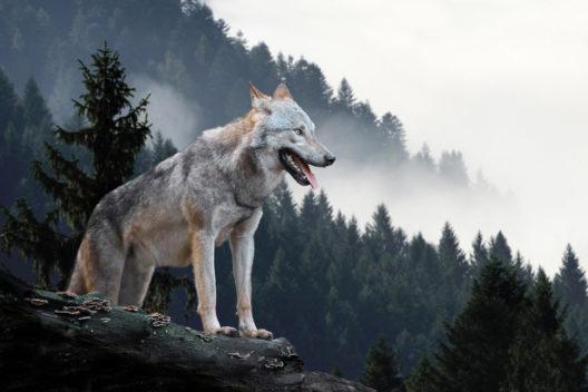 feature post image for Was tun, wenn man einem Wildtier in freier Wildbahn begegnet?