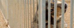 """Ein Haustier bedeutet dauerhaft Verantwortung - auch nach der Krise.  (Symbolbild, Quelle: Stefan Bröckling, flickr.com, CC BY-NC-SA 2.0) Weiterer Text über ots und www.presseportal.ch/de/nr/100019041 / Die Verwendung dieses Bildes ist für redaktionelle Zwecke honorarfrei. Veröffentlichung bitte unter Quellenangabe: """"obs/Schweizer Tierschutz STS"""""""