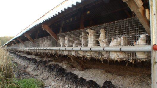 Weltweit werden jährlich schätzungsweise 100 Millionen Tiere wegen ihres Pelzes getötet. (Bild: © VIER PFOTEN | R&D)