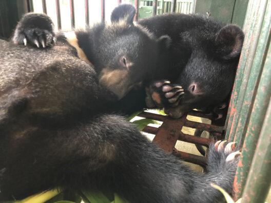 Die zwei geretteten Bärenjungen