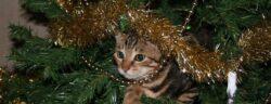 cat-1207460