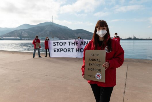 VIER PFOTEN protestiert gegen den Tiertransport (Bild: © VIER PFOTEN | Jesús López Melgares)